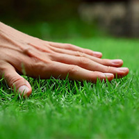 Lawn Care Putney