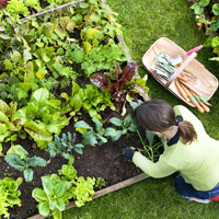 Garden Maintenance Putney
